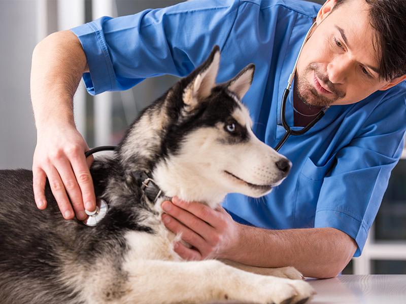 hond bij de dierenarts - www.hondenhotel.com